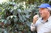 新入荷豆「グアテマラ  ロス・クシナレス農園」販売開始